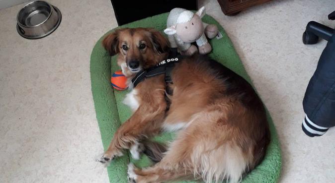 Votre chien durant le temps où je le garderais, dog sitter à Reims