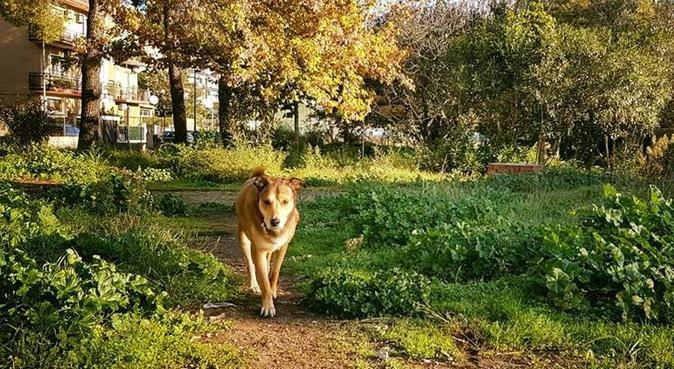 Tante coccole e passeggiate in compagnia =D, dog sitter a Roma