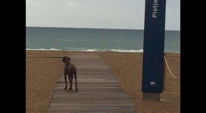 Paz a la playa de Gava Mar, canguro en gava mar