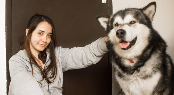 Une nouvelle amie pour ton meilleur ami!, dog sitter à Lille