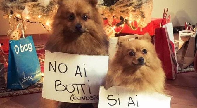Responsabilità, tanti giretti e tanti sorrisi!, dog sitter a Roma