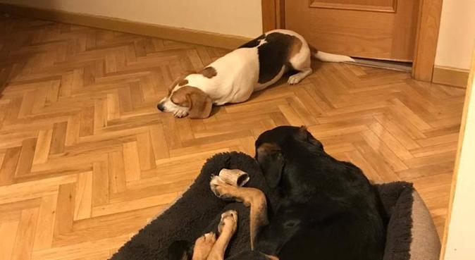 Tus perros como en casa, canguro en Alcorcón, España