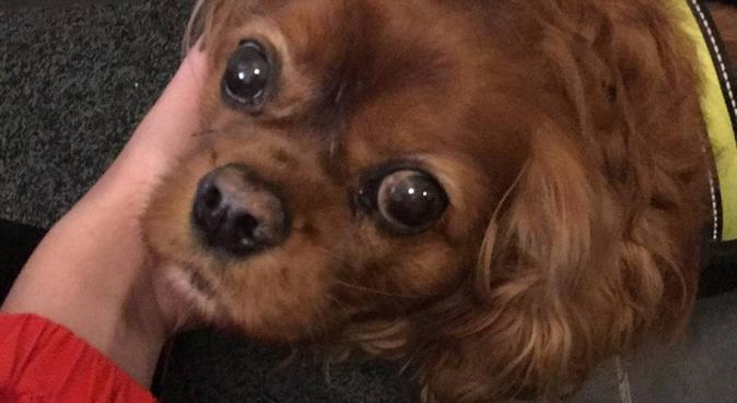 Hundeglad kollektiv søker hund!, hundepassere i Oslo
