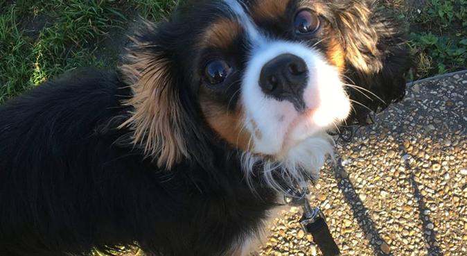 Elodie garde vos animaux à Menucourt, dog sitter à Menucourt