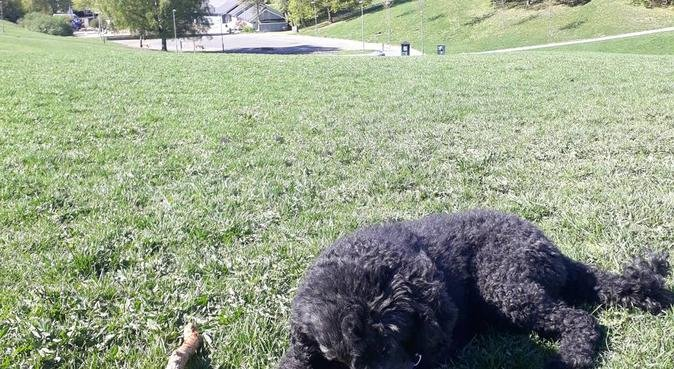 Hundehviskeren 92 - urban turentusiast, hundepassere i Oslo