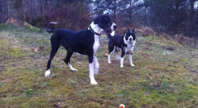 May, hundepassere i Fyllingsdalen