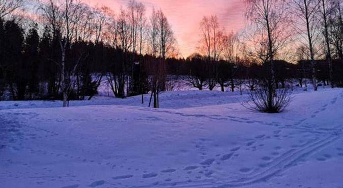 Glad läkarstudent nära campus, hundvakt nära Umeå, Sverige