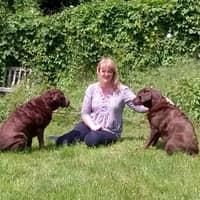 Kath's dog day care