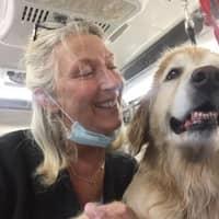 hondenopvang van Karoline