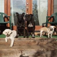 Rosie's dog day care