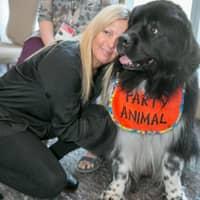 Alana's dog day care