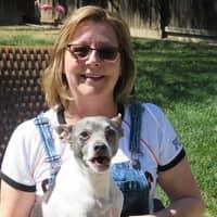 Nancy's dog boarding