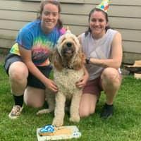 Alexi & Lauren's dog boarding