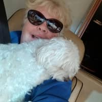 Peggy's dog boarding