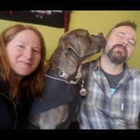 Atticus & Kristin's dog boarding