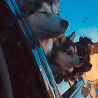 Tia & Christopher's dog boarding