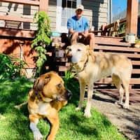 Eric's dog day care