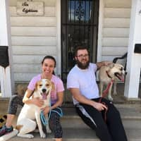 pet sitter Caryce