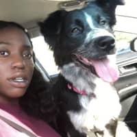 Ashleigh's dog day care