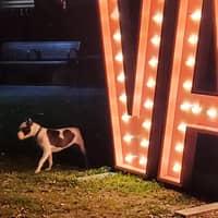 dog walker Jamal