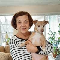dog walker Nancy Jean
