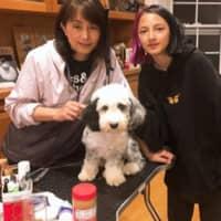 Maggie Meijie's dog boarding