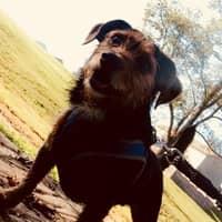 dog walker Aubree