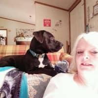 Ruth's dog day care