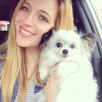 Tess's dog day care