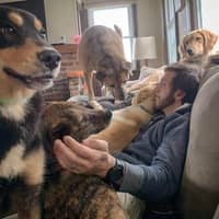 Christopher's dog day care