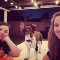 Kristen's dog boarding