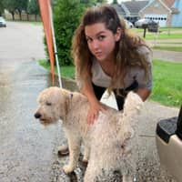 Suzi's dog day care