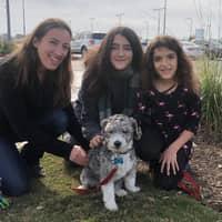 Delphine's dog day care