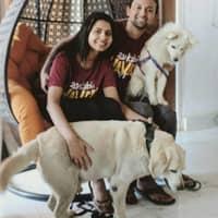 Vivek's dog day care