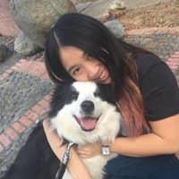 Jasper's dog day care