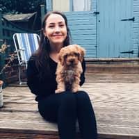 Phoebe's dog day care