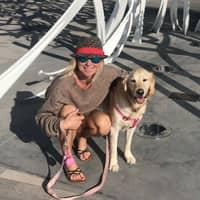 Kaija's dog day care