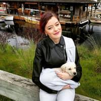Mihaela's dog day care