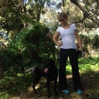 Alison's dog boarding