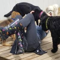 dog walker Camille