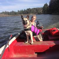 Paula's dog day care