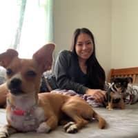 Yee's dog day care