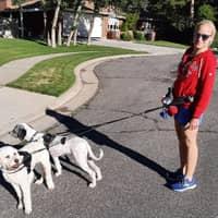 Kim's dog boarding