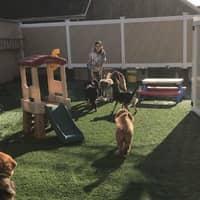 dog walker Yenifer