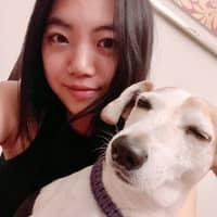 Iris's dog day care