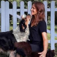Jess's dog day care