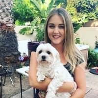 Svet's dog day care