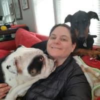 Jodi's dog day care