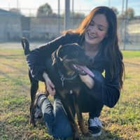 Kelsey & Jason's dog day care