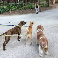 Starr's dog day care